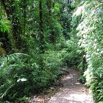Place of Wonder: Santa Elena Cloud Forest in Costa Rica