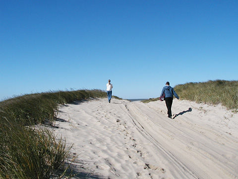 Madaket beachwalkers headed through the dunes.