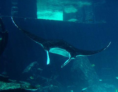 Atlantis Aquarium, Bahamas