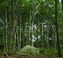 Trees on Bull Island
